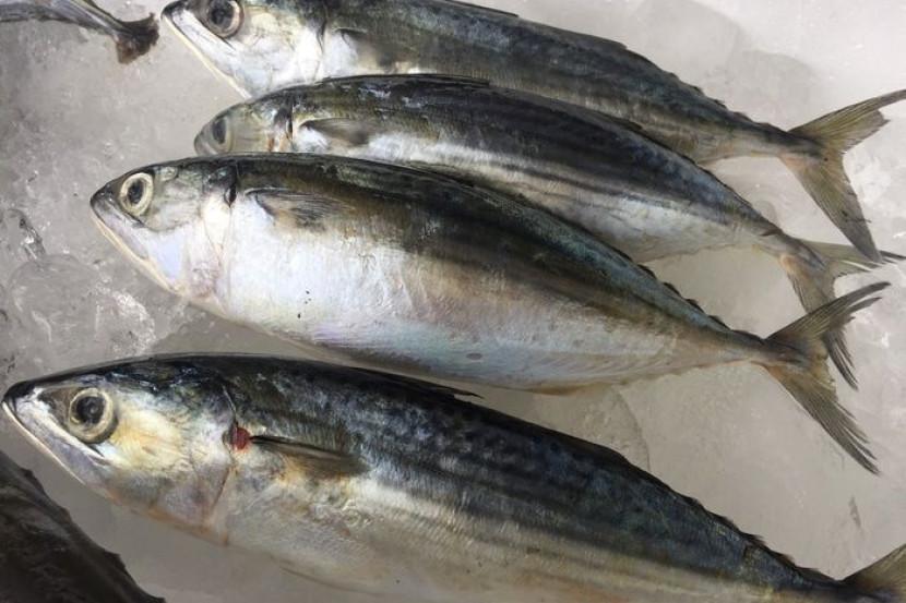 Kaya Omega 3 Tapi Tak Semua Orang Mampu Beli Salmon 4 Ikan Lebih Murah Ini Pun Ada Khasiat Serupa Famili Mstar