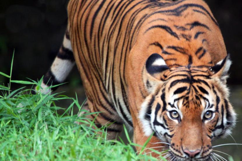 Malaysia Hadapi Isu Kepupusan Haiwan Terancam Semasa Mstar