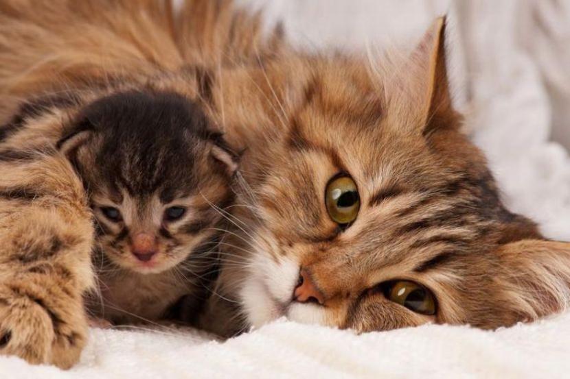 Kucing Boleh Baca Hati Tuannya Ketahui Kelebihan Pelihara Haiwan Ini Dari Sudut Psikologi Kesihatan I Suke Mstar